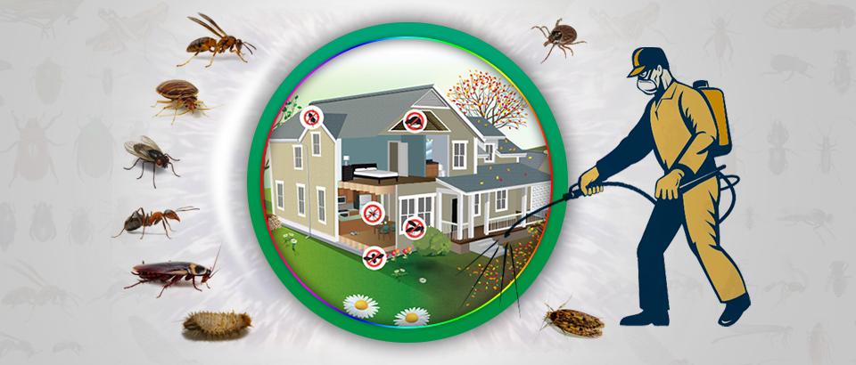 Pest Control Manahawkin